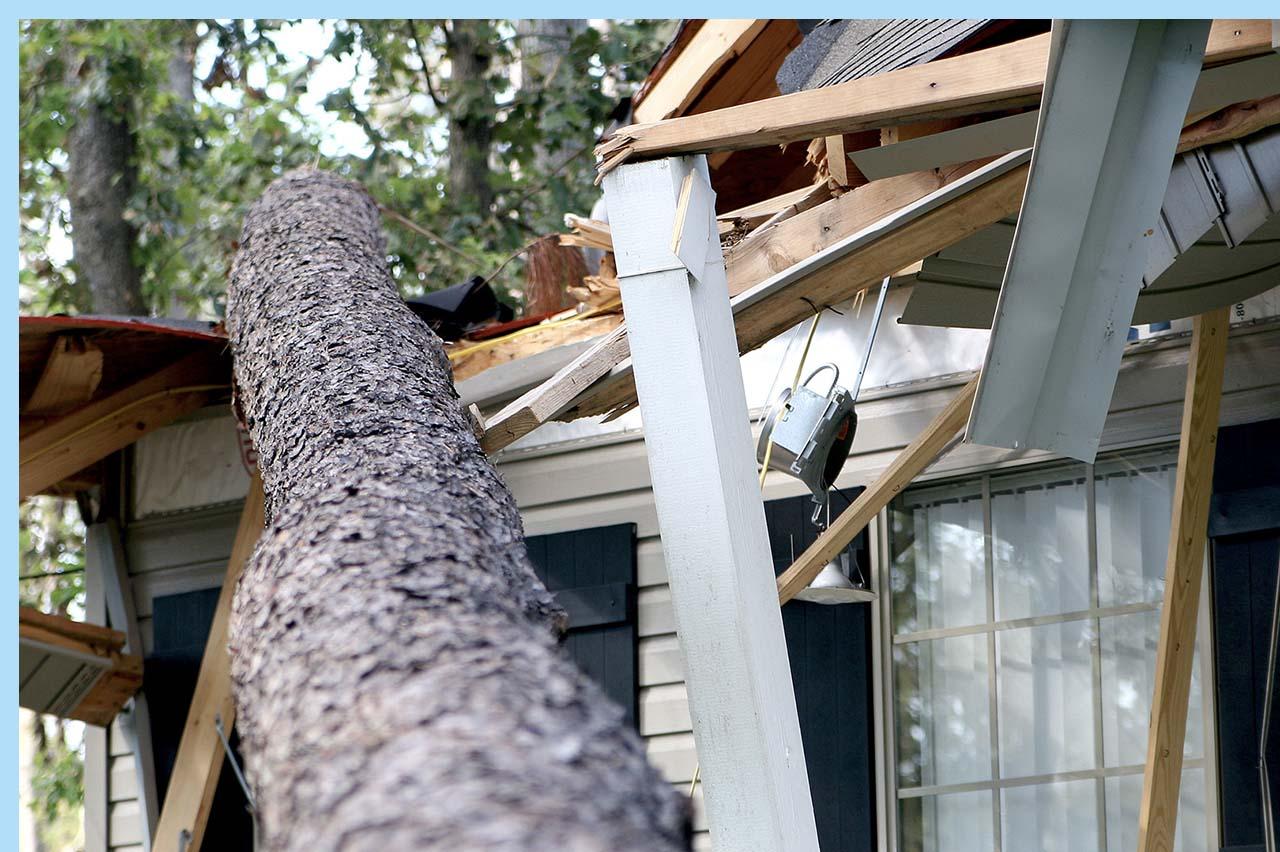 tree crash into house