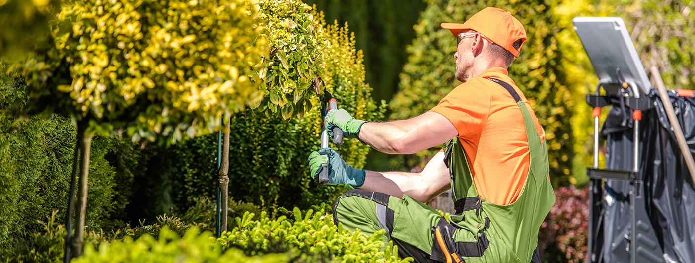 man trimming bushes outside